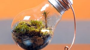 Jak zrobić z żarówki terrarium